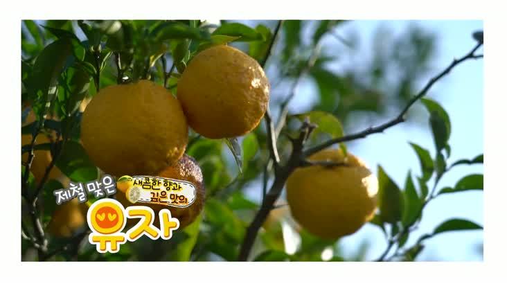 (11/28 방영) 풍물 ( 새콤한 향과 깊은 맛의 유자)