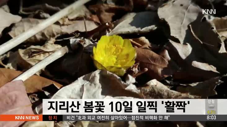 지리산 예년보다 10일 일찍 봄꽃 '활짝'