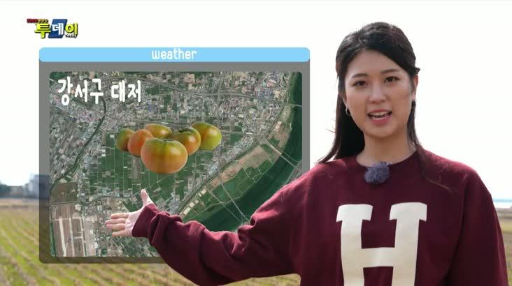 (03/13 방영) 풍물 (봄을 기다리는 이유! 대저 짭짤이 토마토)