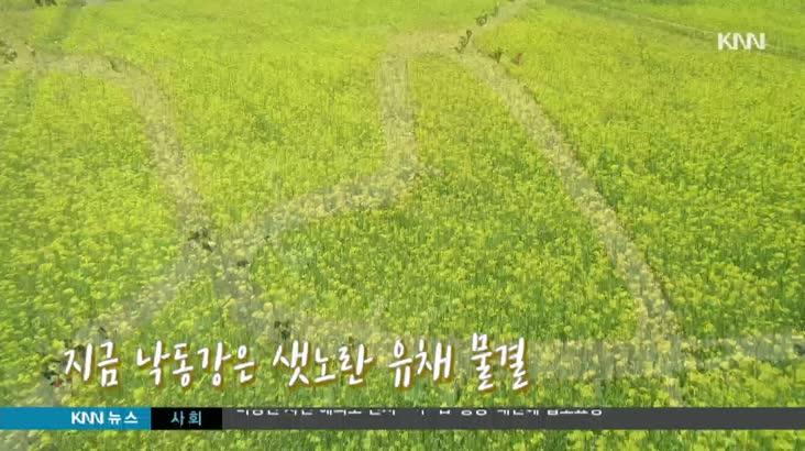 유채꽃 영상 앵커멘트   자막