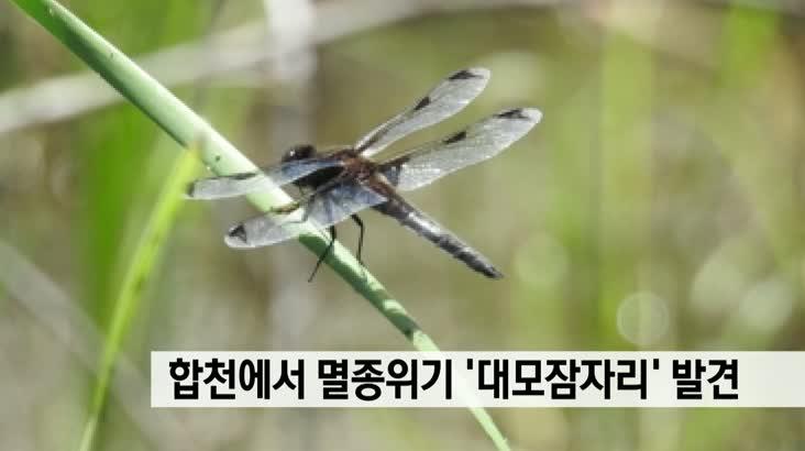 합천 정양늪서 멸종위기 '대모잠자리'발견