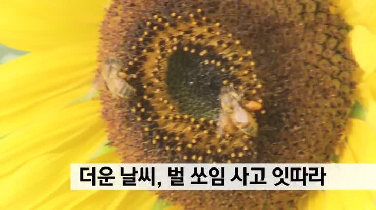 더운 날씨 벌쏘임 사고 잇따라