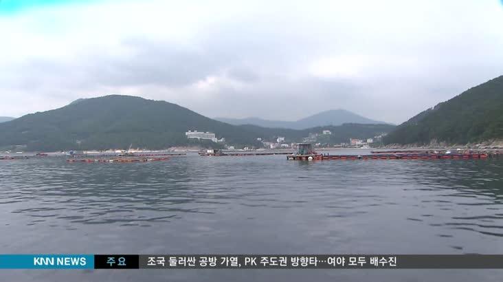 고수온에 물고기 집단 폐사