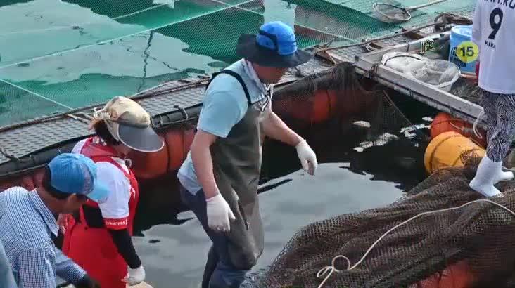 (08/27 방영) 섬마을할매 – 섬을 사랑한 마당발 농어 할매