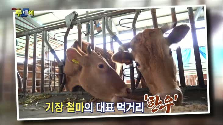 (10/02 방영) 청정자연에서 자란 단백질 보충의 최강자, 한우
