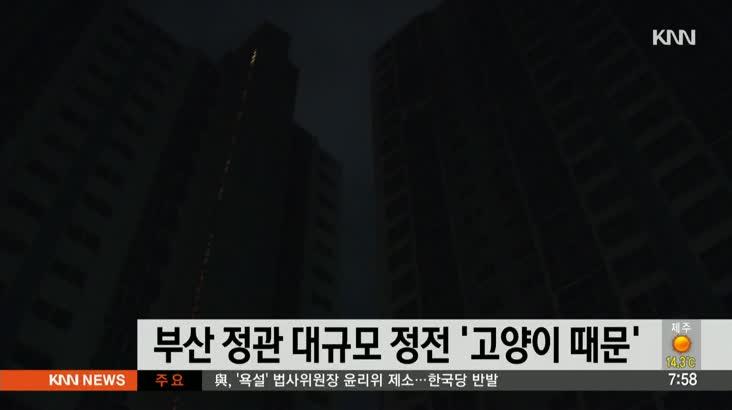 부산 정관 대규모 정전 '고양이 때문'