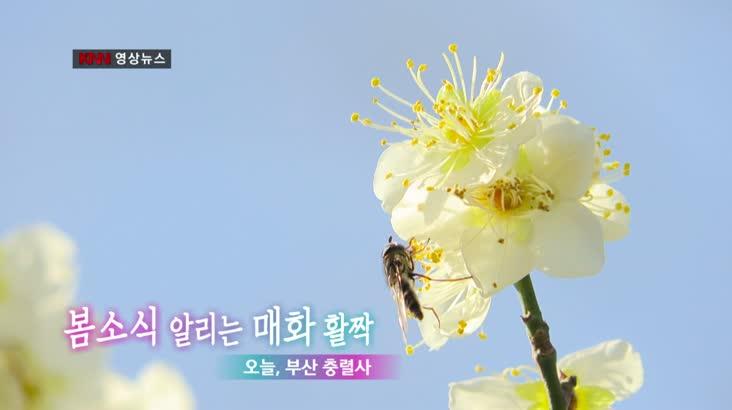 """""""봄을 알리는 매화"""" KNN 영상뉴스"""
