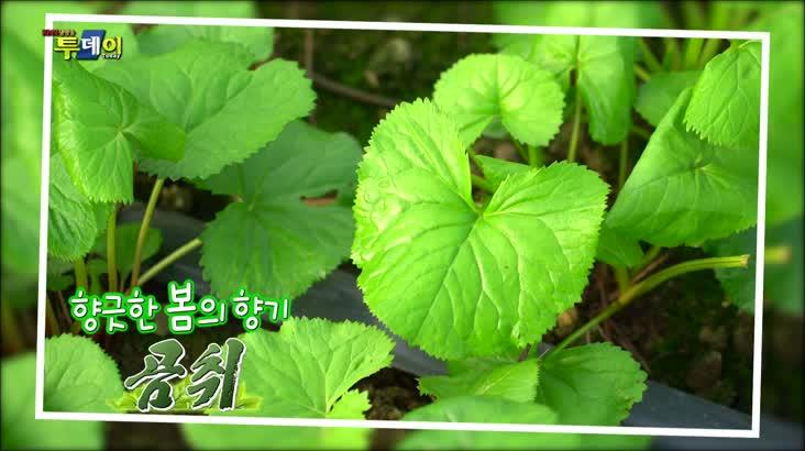 (03/18 방영) 면역밥상 – 향긋한 봄의 향기 곰취