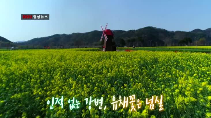 [KNN영상뉴스] 인적없는 강변 유채꽃 넘실