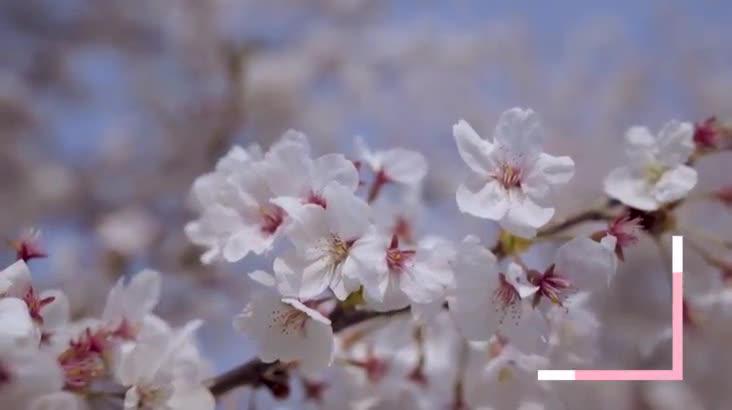 (04/30 방영) 하동 십리벚꽃길