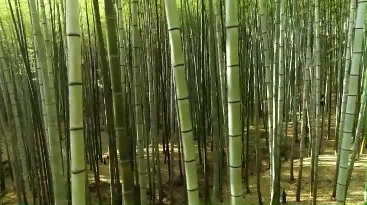 (05/14 방영) 400년의 비밀, 신비의 아홉산숲