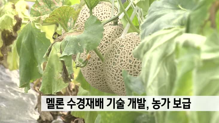 멜론 수경재배 기술 개발, 농가 보급