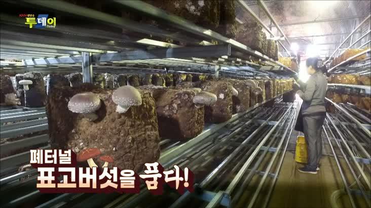 (06/15 방영) 페터널, 표고버섯을 품다!