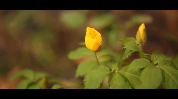 (06/20 방영) 발왕산, 봄으로의 초대