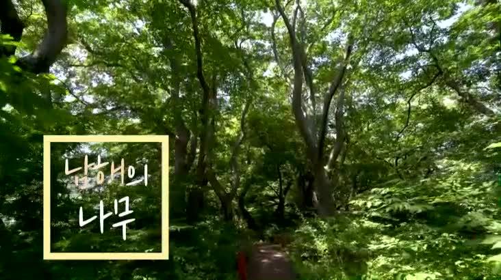 (07/09 방영) 남해의 나무