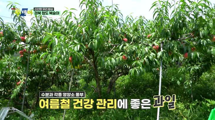 (07/23 방영) 신선한 우리밥상 – 경북 청도 복숭아