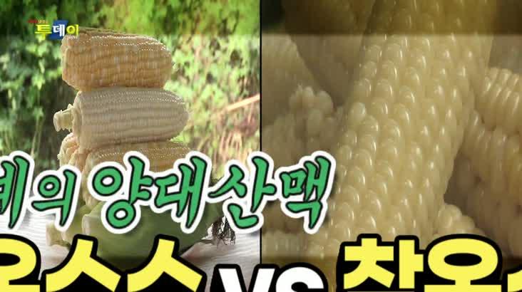 (07/29 방영) 옥수수계의 양대산맥 – 초당 옥수수 vs 찰옥수수