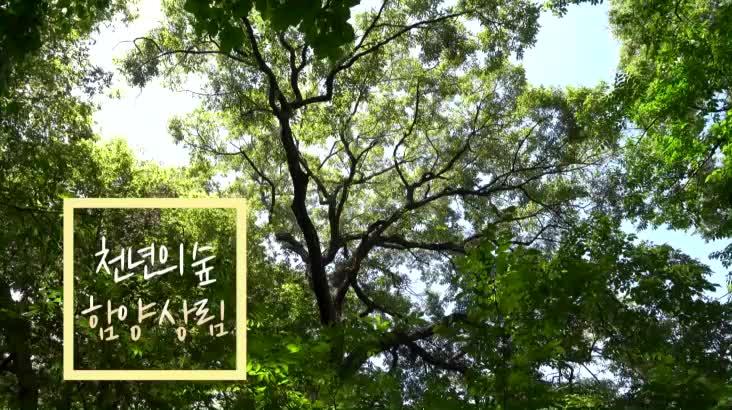 (08/06 방영) 천년의 숲, 함양 상림