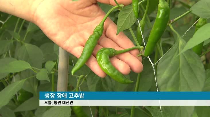 수해 농산물 초토화, 가격까지 '요동'