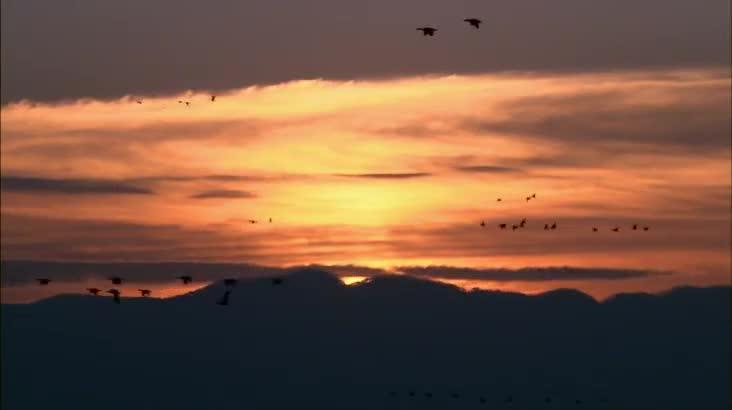 (09/12 방영) 천수만 다시 새를 만나다