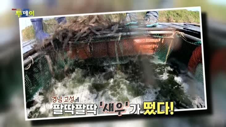 (10/06 방영) 풍물 – 팔딱팔딱 가을 밥상 책임지'새우'