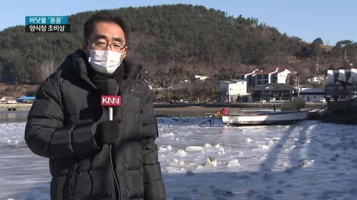 바다도 얼려버린 한파, 양식장 비상