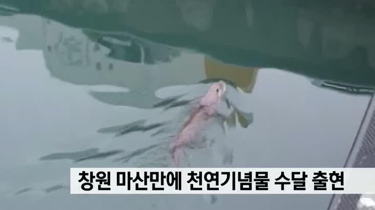 창원 마산만에 천연기념물 수달 출현