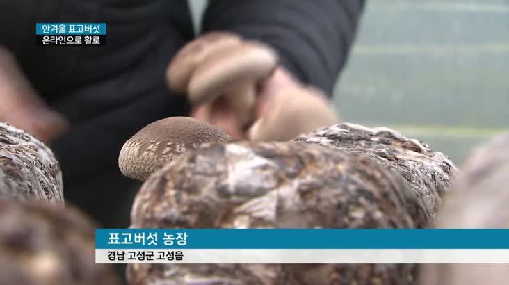 동절기 표고버섯 수확, 온라인에 주력