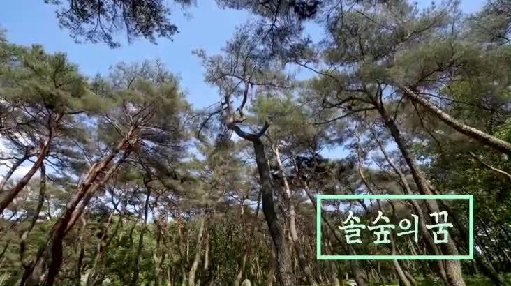 (06/12 방영) 위대한 유산 100경 – 솔숲의 꿈, 거창 동호숲