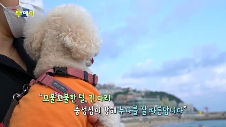 (07/05 방영) 반려동물과 함께하는 동고동락 – 애프리 푸들 ''강이''