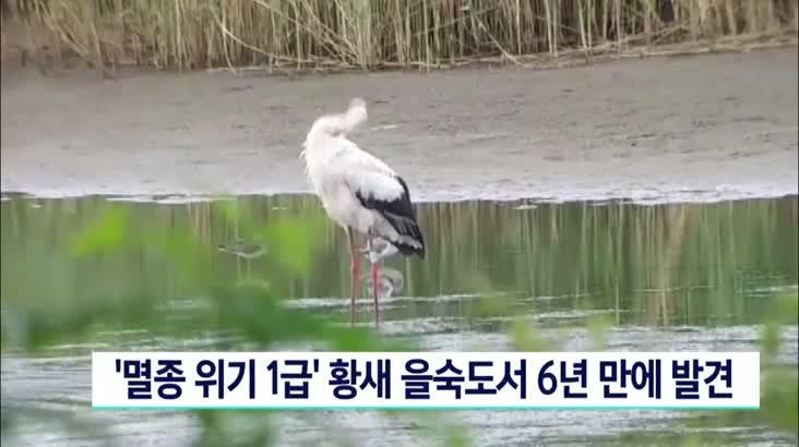 국제보호종 황새 을숙도에서 6년만에 발견