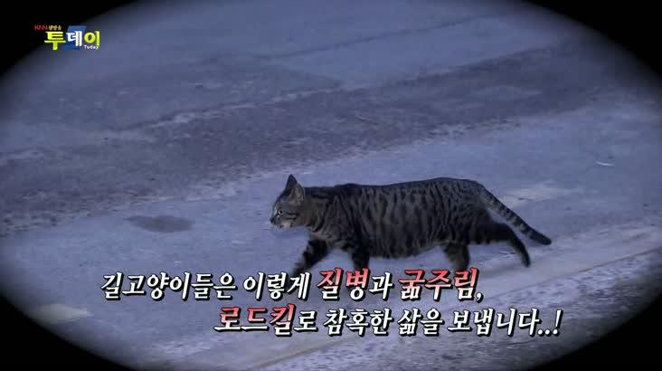 (09/06 방영) 반려동물과 함께하는 동고동락 – 길고양이들의 엄마