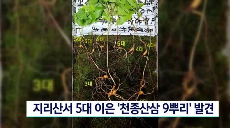 지리산서 5대 이은 천종산삼 9뿌리 발견